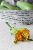 Zucchini Blossom