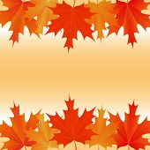Maple Leaves Autumnal Background