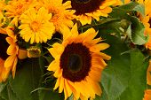 sunflowers and marigold flowers close up