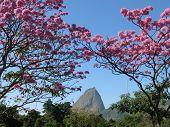 Sugarloaf, Rio de Janeiro
