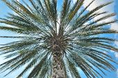 Palm Tree With Blue Sky
