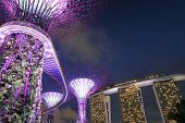 Supertree Grove and Marina Bay Sands Singapore
