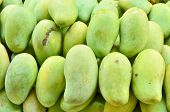 Fresh Green Mangoes