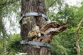 Tree Bracket.
