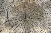 Cross Section Of Tree Trunk