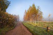 Early Foggy Morning In The Estate Trigorskoye