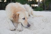 The Dog on the Beach