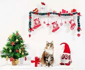 funny cat and christmas decoration