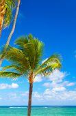 Tropical Palm.
