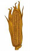 Corn ( corncob )