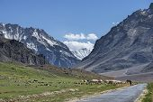 pic of manali-leh road  - High Mountain Road And Flock At The Side - JPG
