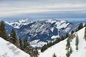 Winter Alpine Landscape Framed By Firs Forest Slopes