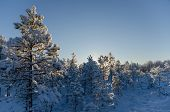 Beautiful winter morning with snow