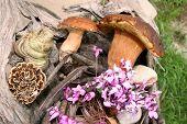 Boletus Wild Mushrooms In Forest