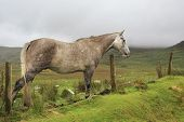 Horse on background of mountains in clouds.