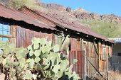 foto of shacks  - Shack in need of repair surrounded with cacti taken in Oatman - JPG