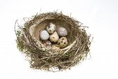 nest it twisted from grass with eggs