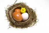 nest it twisted from grass with eggs and chicken