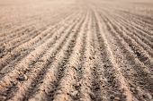 Furrows In Agricultural Field After Plowing It.