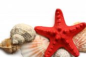 Seastar And Seashells