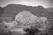 Cuba - Karstic Landscape