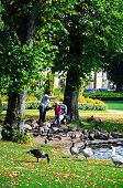 Feeding the ducks, Buxton.