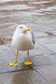 Curious Albatross
