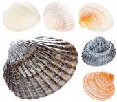 Sea Cockleshell Isolated On White Background Set Collage Collection