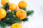 Fresh Tangerine With  Spruce Branch