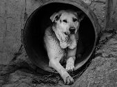 stock photo of slave  - Dog like slave in bad conditions - JPG