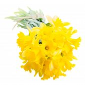 image of daffodils  - pile of spring yellow daffodils close up isolated on white background - JPG