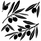 stock photo of olive branch  - Vector Illustration black and white silhouette set of olive tree branches with fruits on white background - JPG