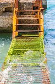 pic of algae  - A rusty ladder covered with algae in the sea - JPG