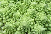 picture of romanesco  - Macro close up detail of a Romanesco Broccoli - JPG