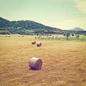 pic of hay bale  - Landscape with Many Hay Bales and Vineyard in Italy Instagram Effect - JPG