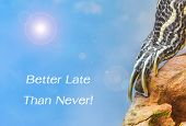 pic of craw  - metaphor of BETTER LATE THAN NEVER with leg of turtle - JPG