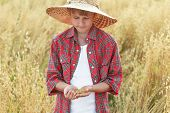 picture of oats  - Portrait of teenage farmer boy is checking oat or Avena sativa seeds in cupped palms at ripe field - JPG