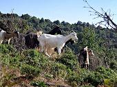 stock photo of paysage  - la nature marocaine plus belle paysage et fond d - JPG