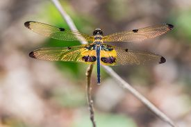 stock photo of flutter  - Close up of yellow - JPG