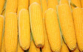 picture of corn cob close-up  - Yellow background  - JPG