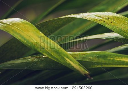 Close Up Of Palm Leaves
