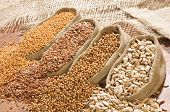 picture of mustard seeds  - seeds of mustard flax coriander and sunflower are spilled from linen sacs - JPG