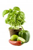 Basil, Lime, Chili & Green Bell Pepper Isolated On White Background