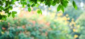 Nature Background, Blur Green Tree Park Outdoor With Bokeh Light Background, Banner Spring And Summe poster