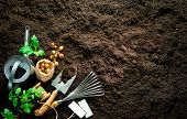 Gardening tools and seedlings on soil. Spring in the garden poster