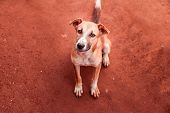 Stray Dog Asking For Food. Horizontal Photo poster