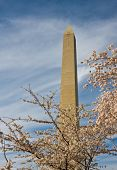 Washington Monument With A Few Cherry Blossom Branches poster