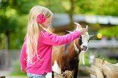 Cute Little Girl Petting And Feeding A Goat At Petting Zoo. Child Playing With A Farm Animal On Sunn poster