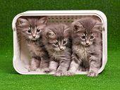 Cute gray kittens in box on artificial green grass