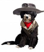 picture of texans  - dog dressed as a true Texan cowboy - JPG